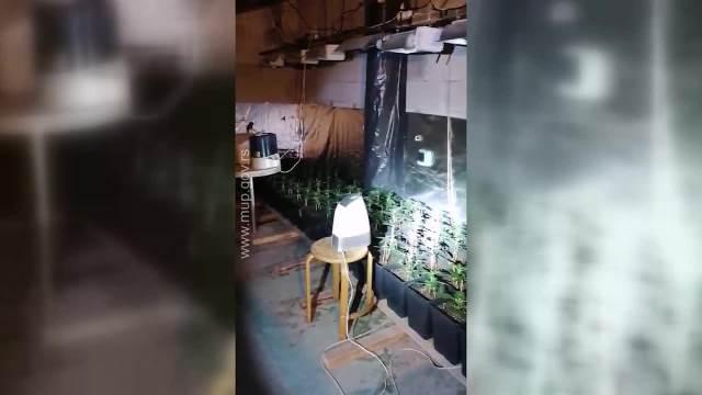 Hapšenje u Beogradu zbog ilegalne laboratorije za uzgoj marihuane