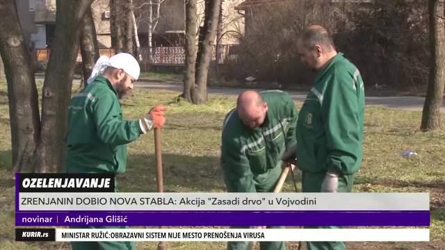 ZA ZDRAVIJU ŽIVOTNU SREDINU: Akcija Zasadi drvo u Vojvodini! Grad Zrenjanin dobio nova stabla (KURIR TELEVIZIJA)