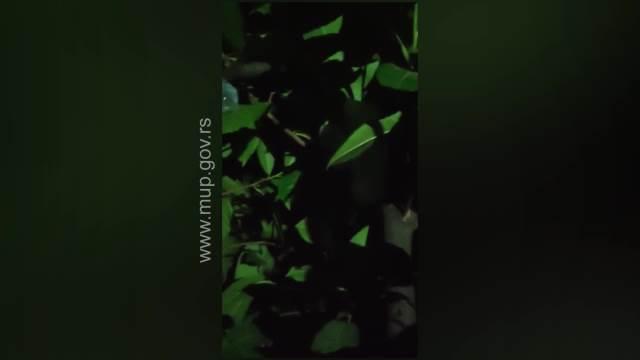 MLADIĆ (22) UHAPŠEN NA ZVEZDARI: 49 paketića marihuane krio u krošnji drveta