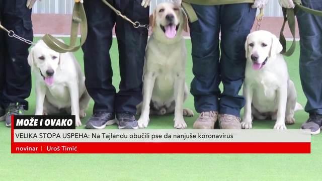 Na Tajlandu obučili pse da otkriju koronu