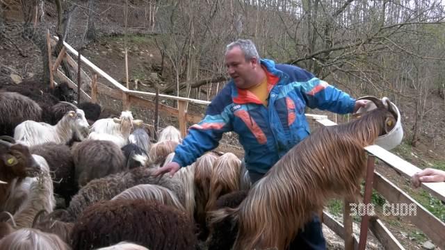 U CARSTVU ŽIVOTINJA! Napustio direktorsko mesto u Vranju, pa se posvetio gajenju autohtonih rasa srpskih životinja