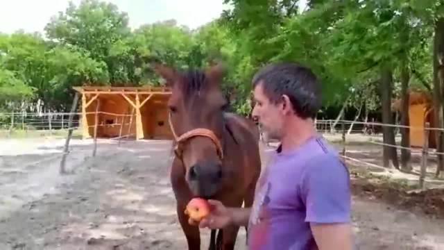 POGLEDAJTE MOMENAT KOJI JE ODUŠEVIO SVET! 3 POBEDNIKA! Jokićev konjušar i njegov konj i BIĆE VAM JASNO KAKO SE POSTAJE ŠAMPION