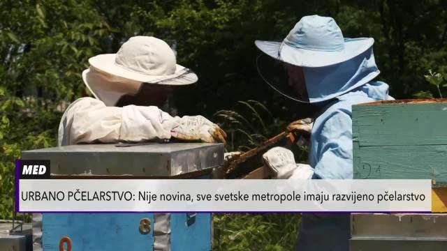 SLATKA PRIČA DAVIDA I DARIJA: Usred Dorćola drže 2.000.000 pčela! Urbano pčelarstvo normalna pojava u svetu, a ima ga i Beograd