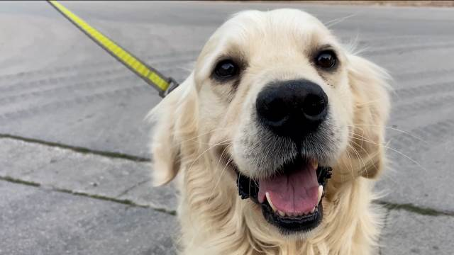 Dajte vodu psima na ulici, ovo su načini kako još možete da im pomognete