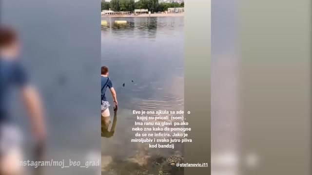 SVAKOG JUTRA PLIVA KOD BANDŽIJA: Novi snimak rešava misteriju ajkule na Adi Ciganliji