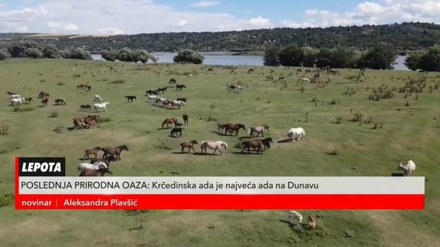VIŠE OD 2.000 ŽIVOTINJA OVDE UŽIVA U POTPUNOJ SLOBODI! Ovakav prizor može da se vidi samo na Krčedinskoj adi na Dunavu