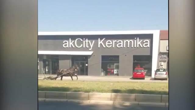 KONJ JURI BEOGRADOM! Odmetnuta životinja galopirala je Višnjičkom ulicom dok su građani gledali u neverici (KURIR TV)