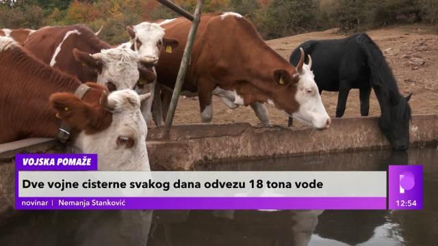 EKSKLUZIVNI SNIMCI SA SUVE PLANINE! Sa VOJSKOM smo nosili vodu na pojilo za 800 krava i 200 konja: Zabeležene POTRESNE slike