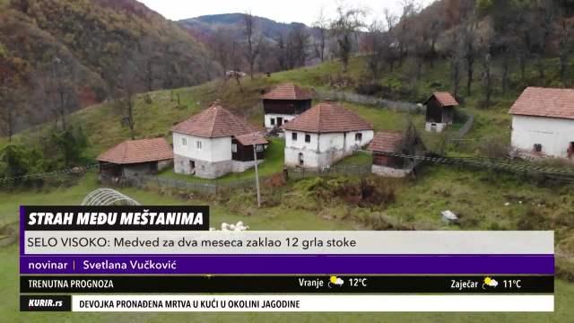 STRAH I BEZNAĐE MEĐU MEŠTANIMA: Medved hara u ariljskom selu Visoka! (KURIR TELEVIZIJA)